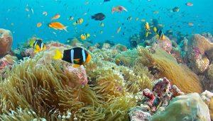 diving-punta-cana